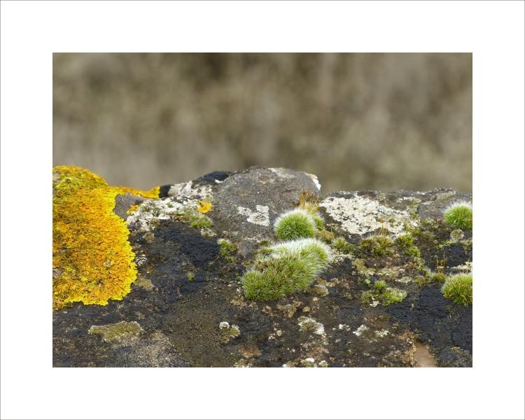 Lichens&Mousse